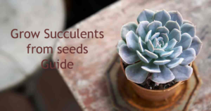 grow succulents featured image