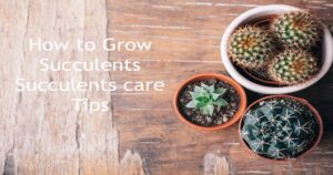 How to grow and care for succulents