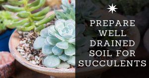 soil for succulents