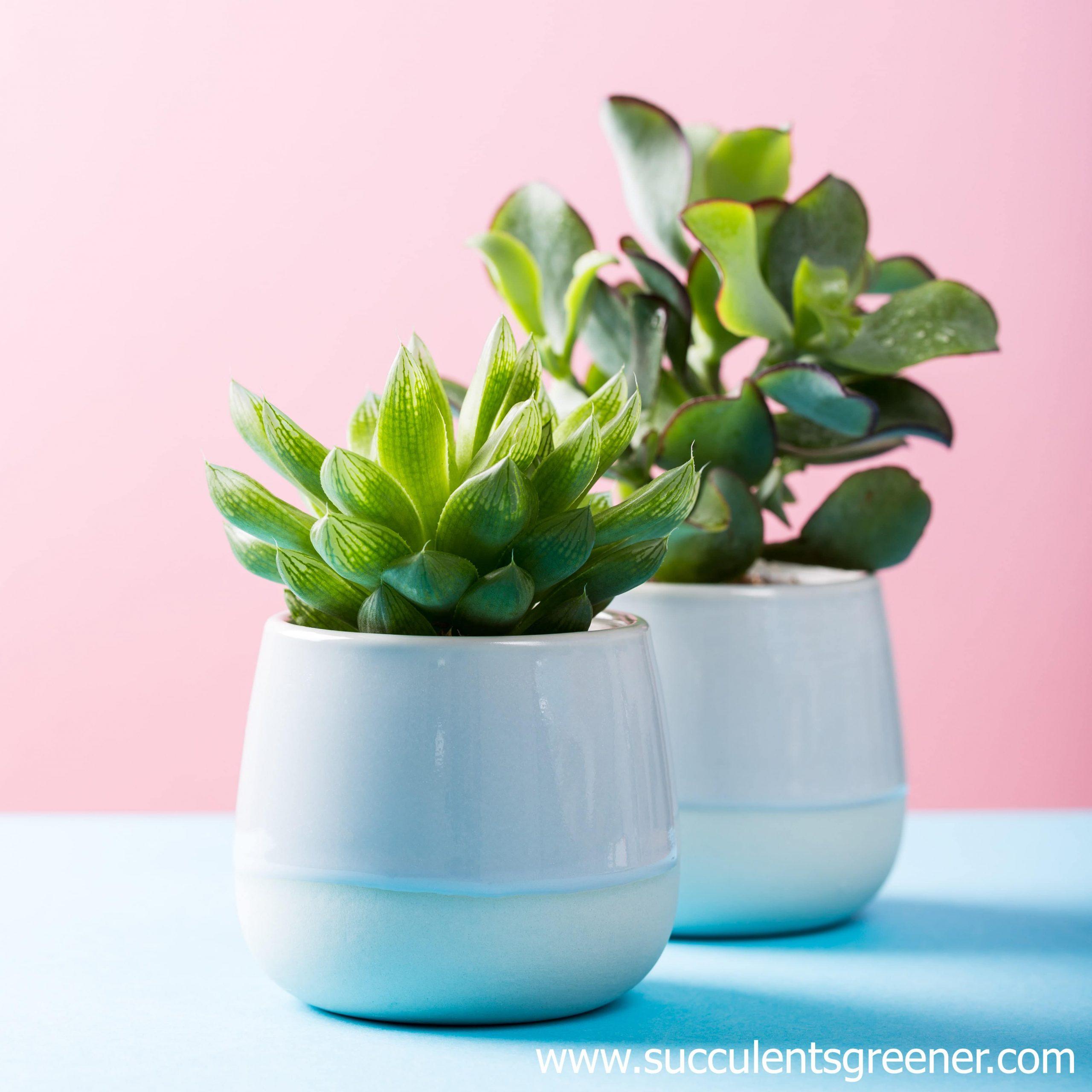succulent pot ceramic